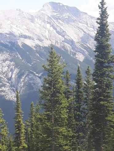 Sulphur Mountain Summit and Banff Gondola