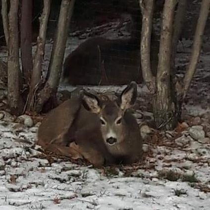 beautiful- bambi