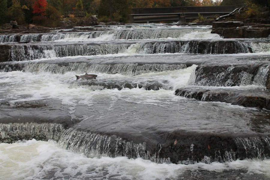 sauble-falls-sauble-beach-ontario-waterfalls