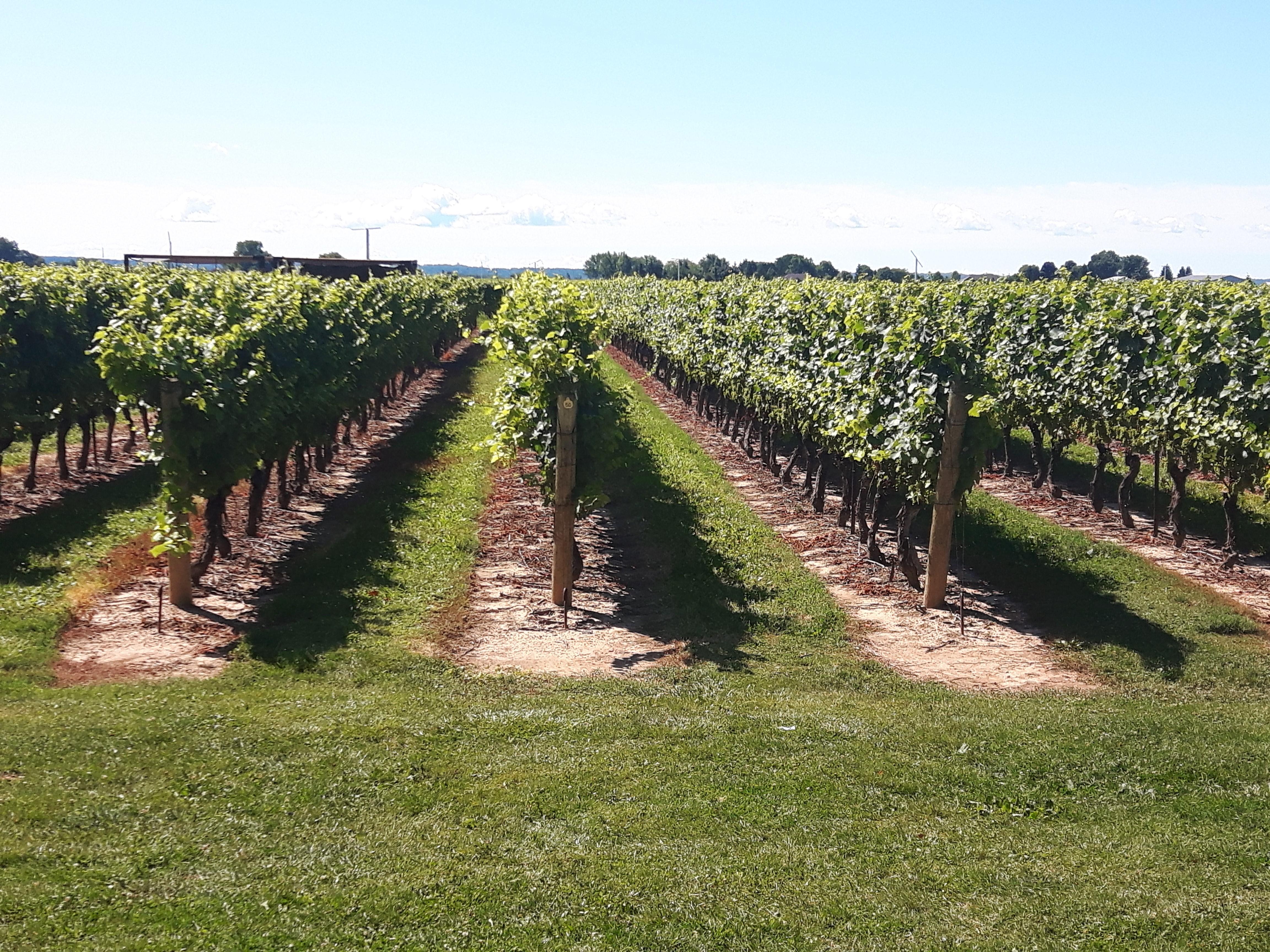 Niagara-Escarpment-vineyard-jackson-triggs-winery