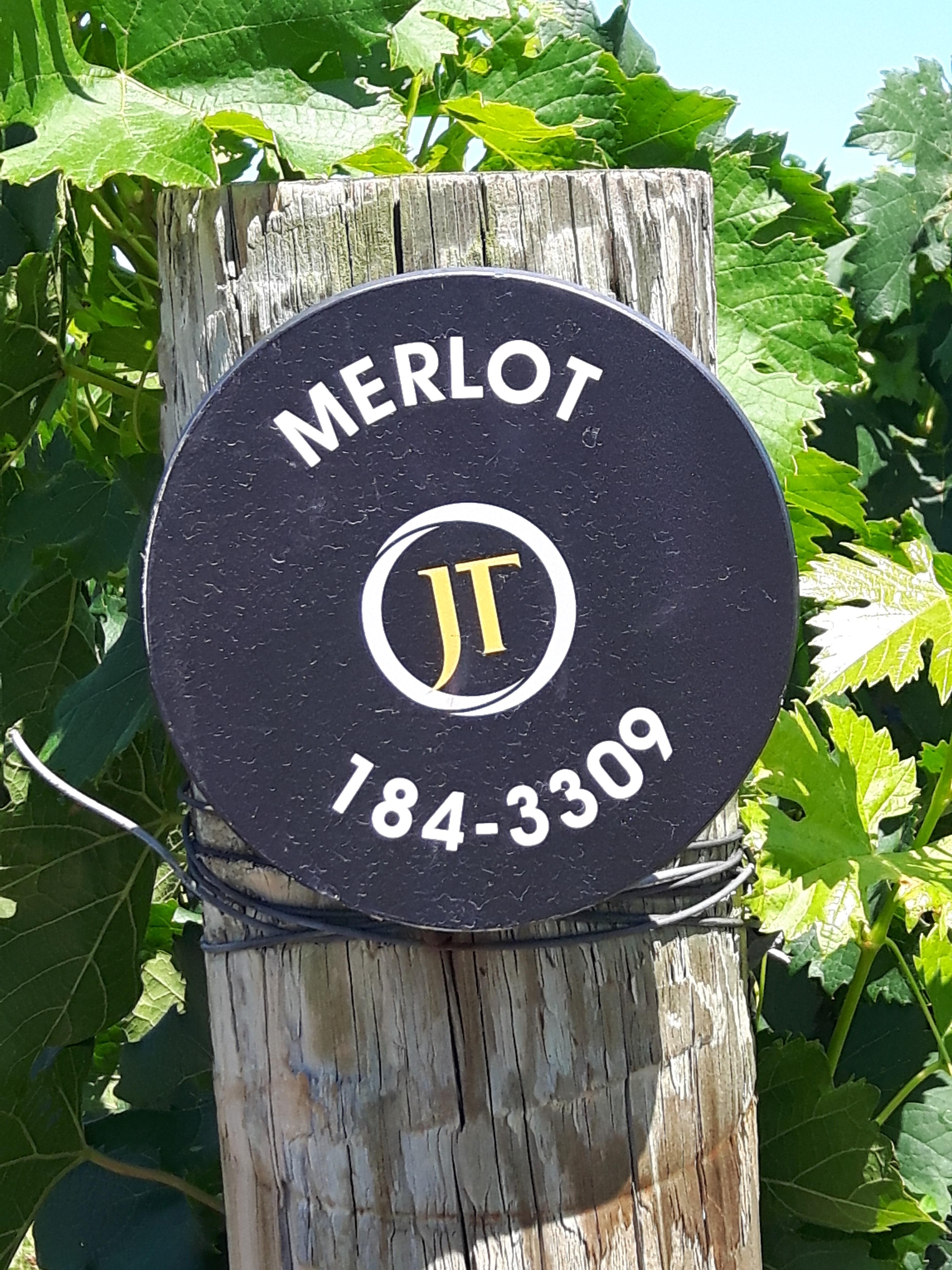 jackson-triggs-merlot-is-my-favourite