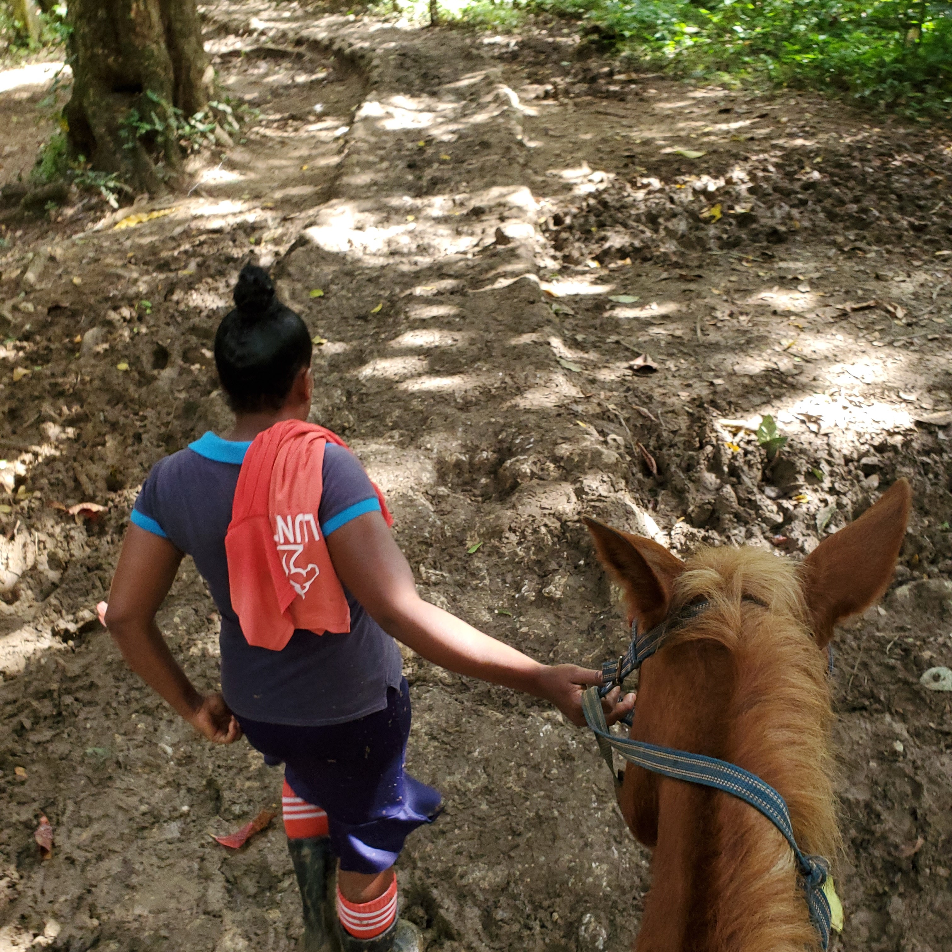 guide and horse