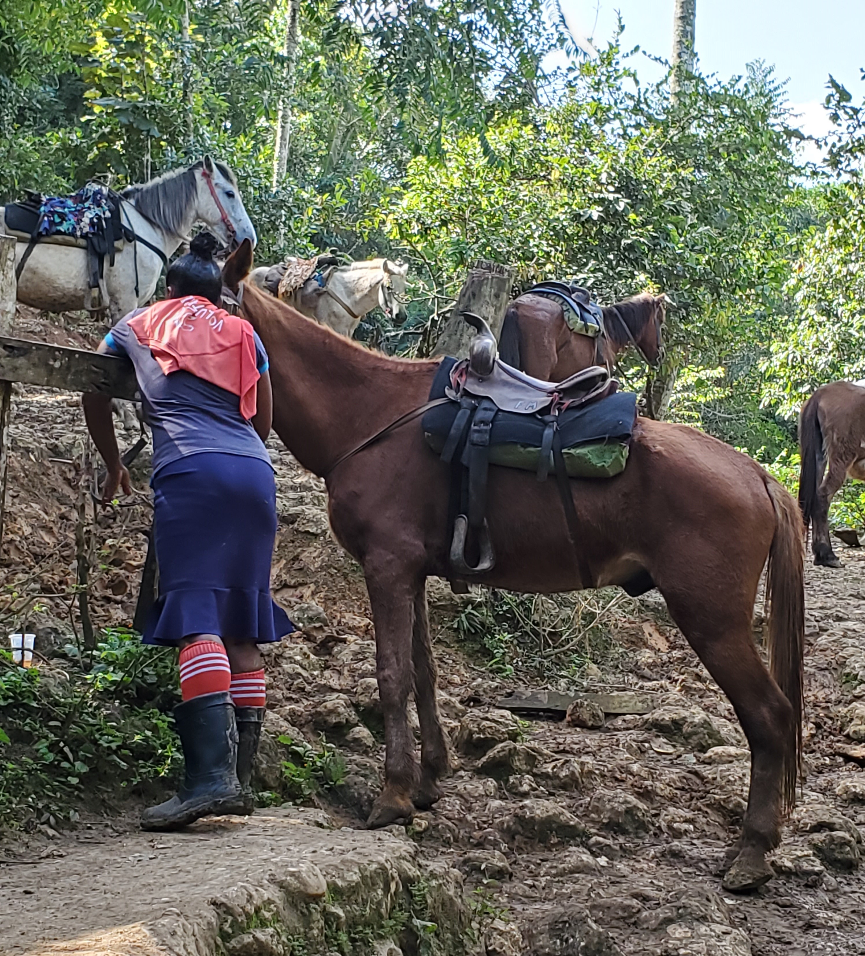 guide tying horse