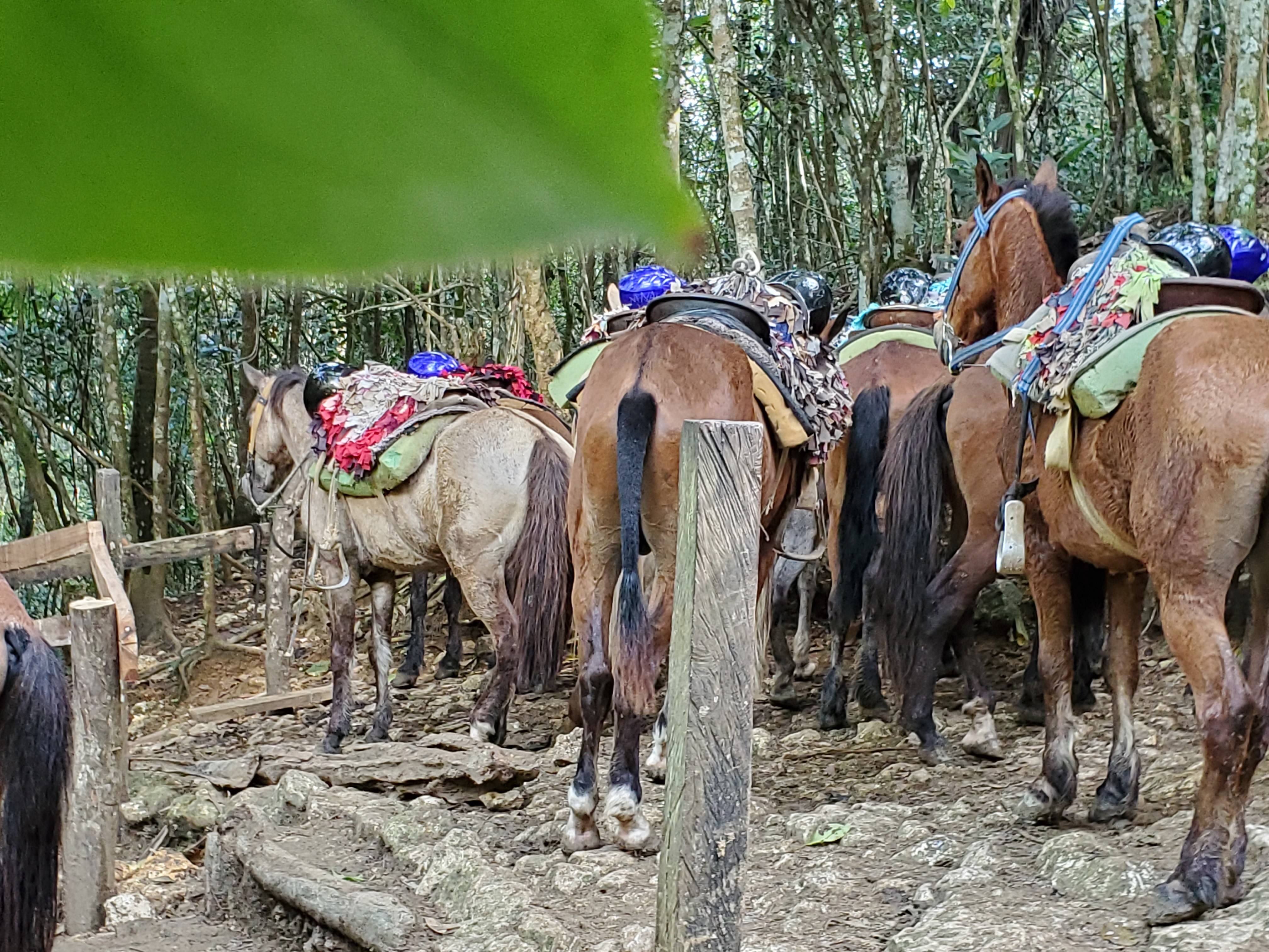 horse-back-riding-adventure-in-dominican-republic