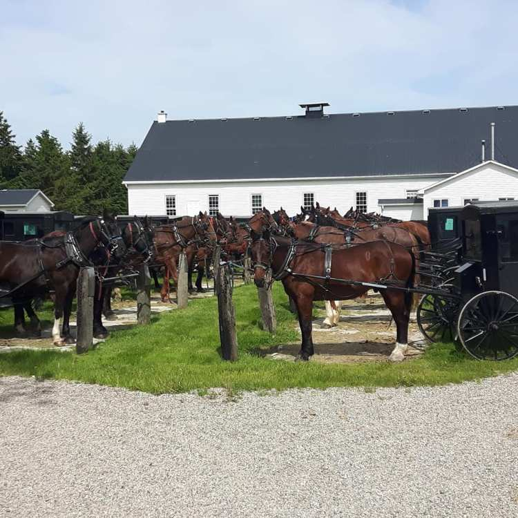 Mennonite Country